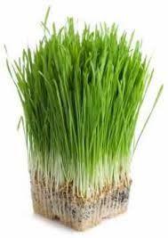 Zelené potraviny GW